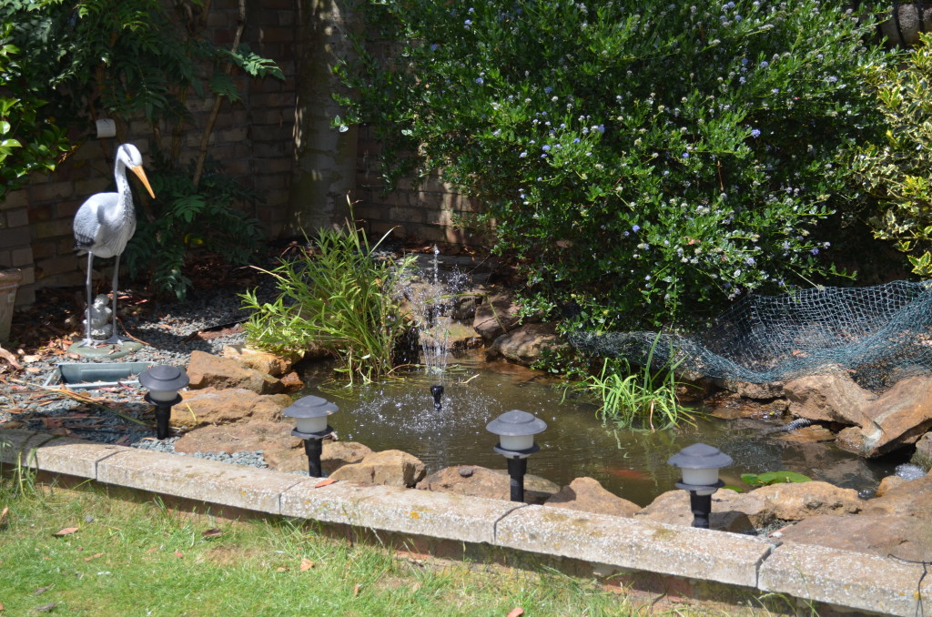 Basic pond package garden pond specialists in the for Small pond construction