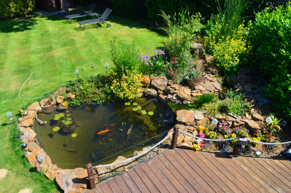 Image gallery natural pond construction for Natural fish pond