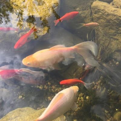 FISH POND DESIGN