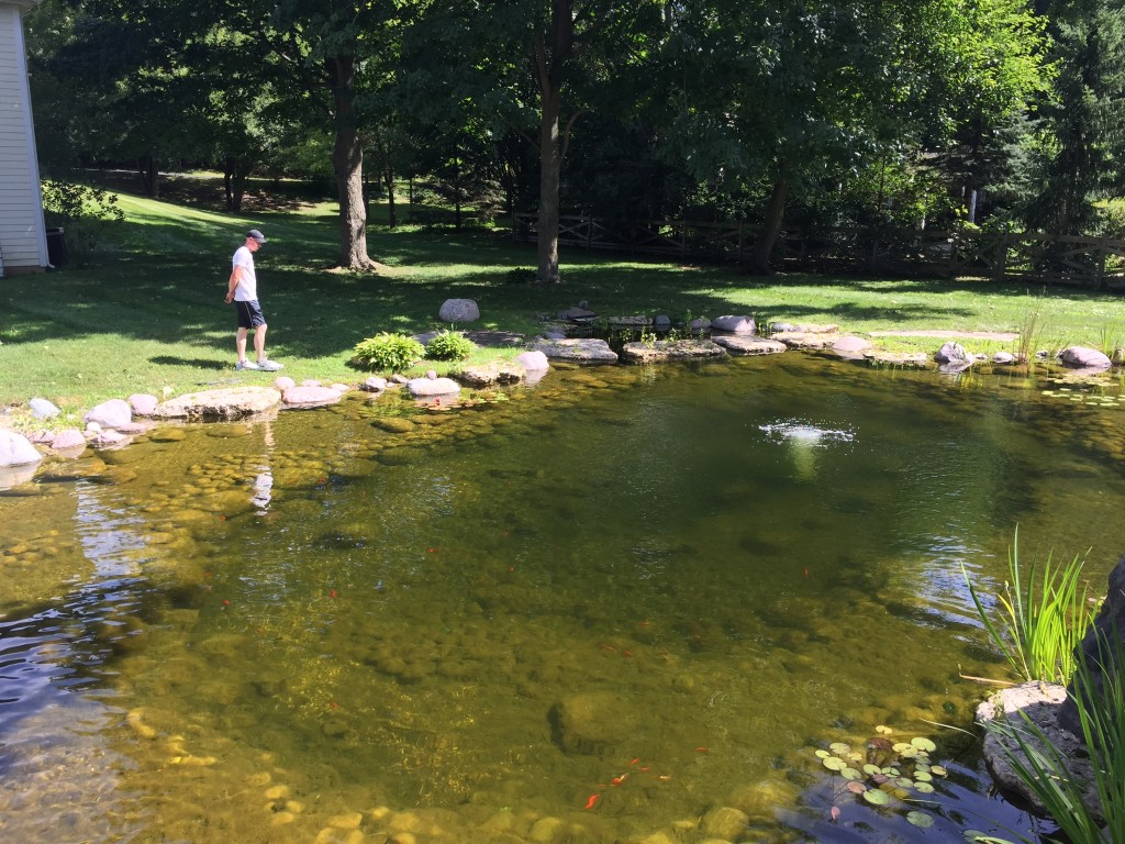 Garden Pond Cleaning