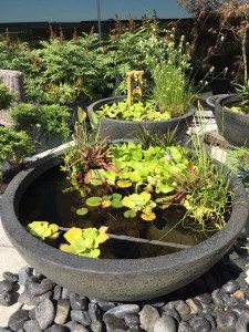Small space pond design and water feature design garden for Small pond maintenance