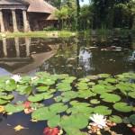 Pond Design – Planning