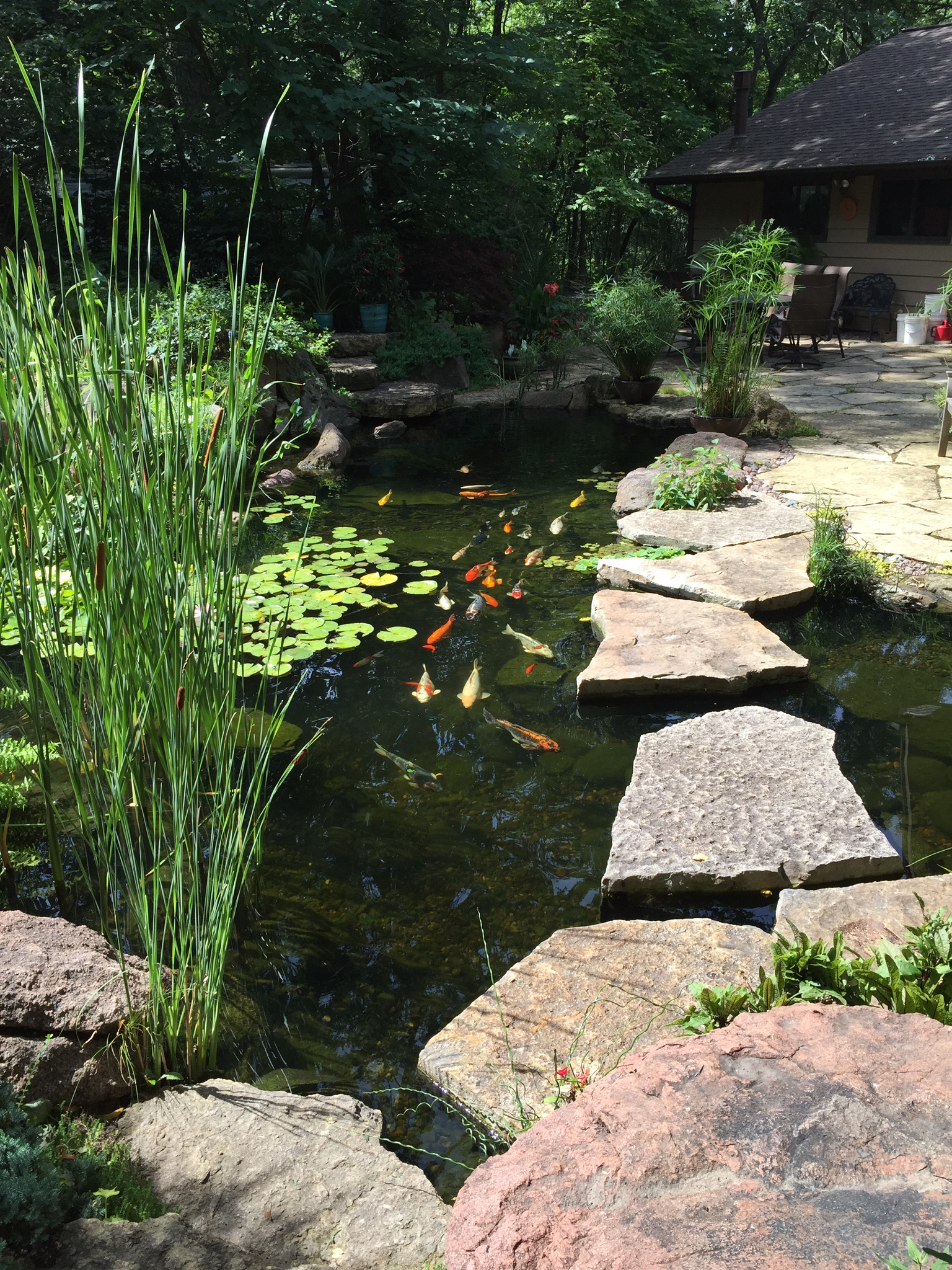 Garden Pond Specialists In The