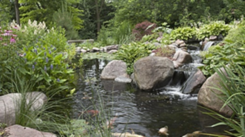 Portfolio garden pond specialists in the midlands uk for Fish pond specialists