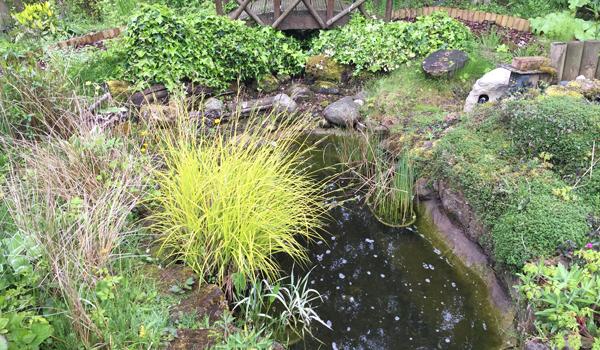 Pond Case Study