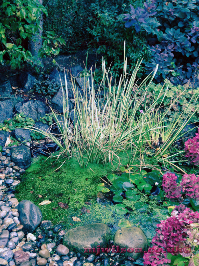 Pond building services in northamptonshire by any pond limited for Garden pond specialists