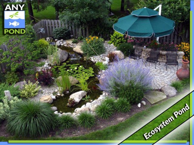 Ecosystem pond package garden pond specialists in the for Garden pond ecosystem