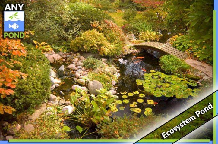 Ecosystem Koi Ponds