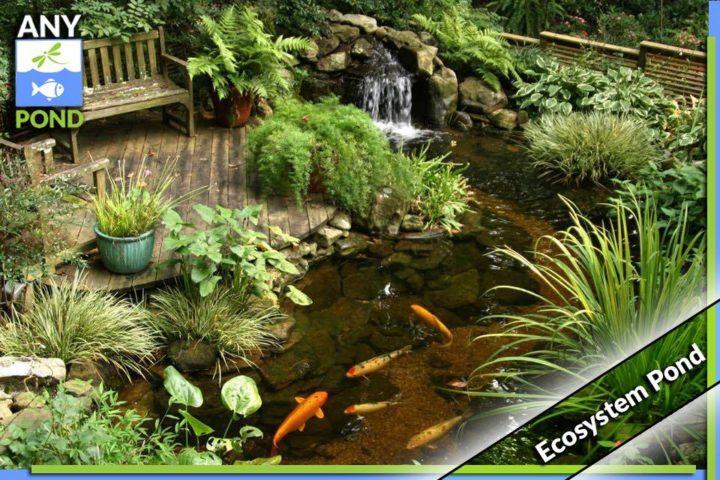UK Ecosystem Pond