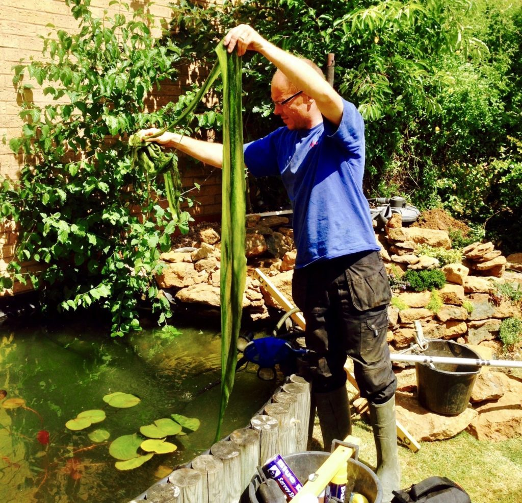 Pond maintenance uk from your leading pond maintenance for Backyard pond maintenance