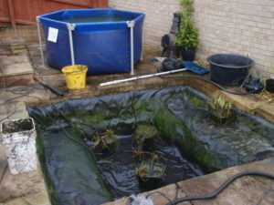 How to clean a small pond with fish