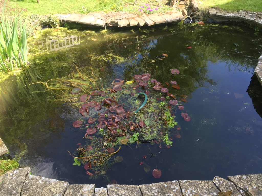 Pond cleaning services northampton any pond limited for Large outdoor fish ponds