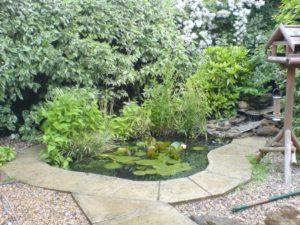 Best Pond Shapes