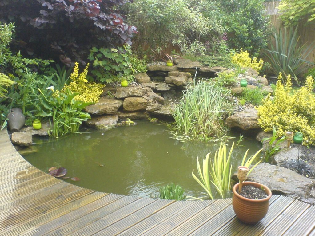 pond-videos-algae