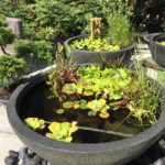What are the best plants for a patio pond?